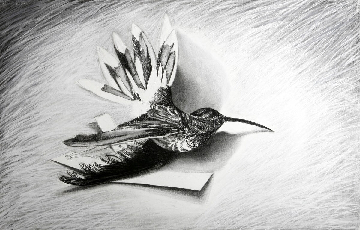 Hummingbird IV 2007 Charcoal 66x101cm