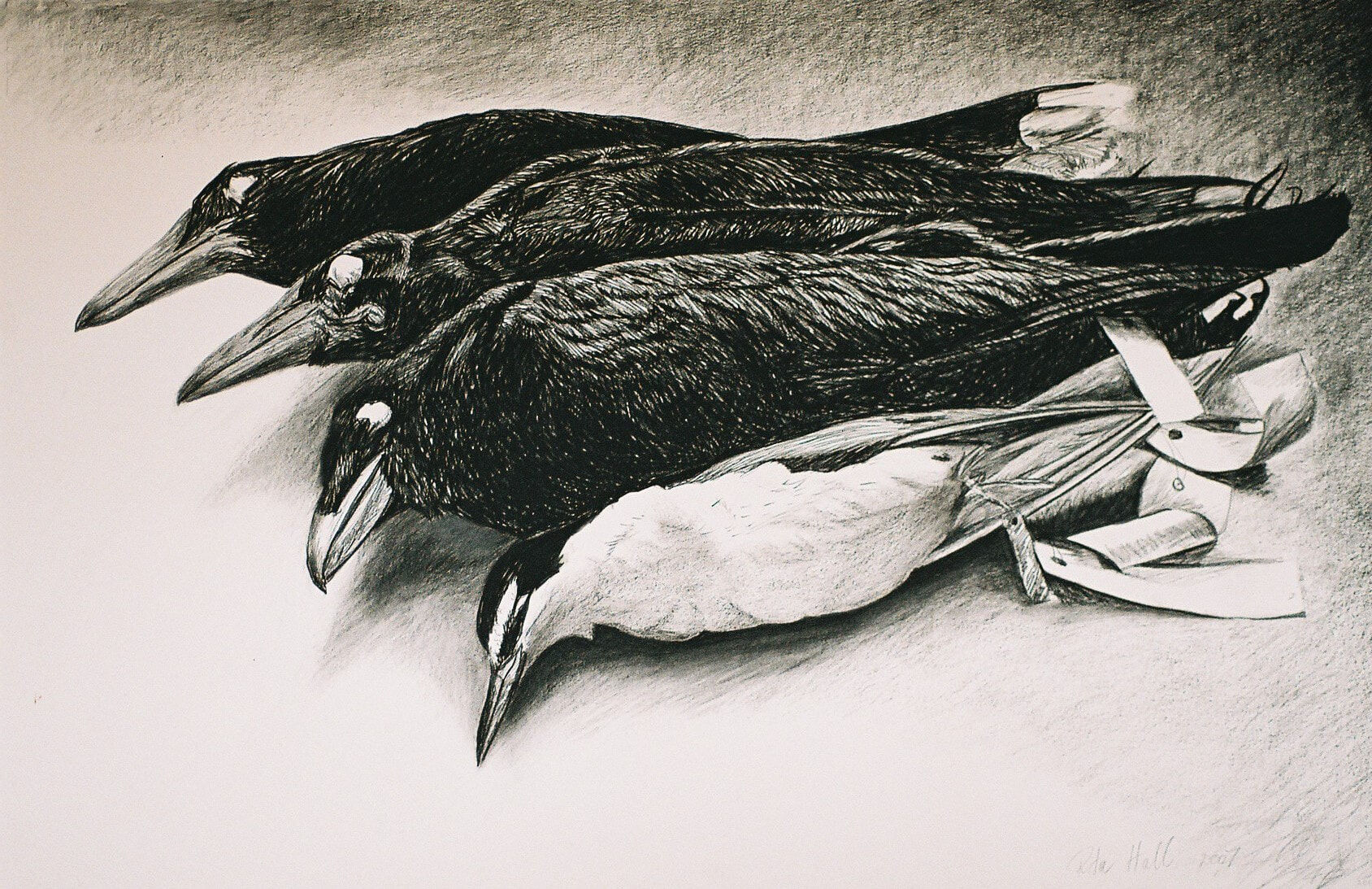 'Museum Collection' 2007 charcoal 66 x101cm Dobell Finalist 2007 &  AGSA collection 2019