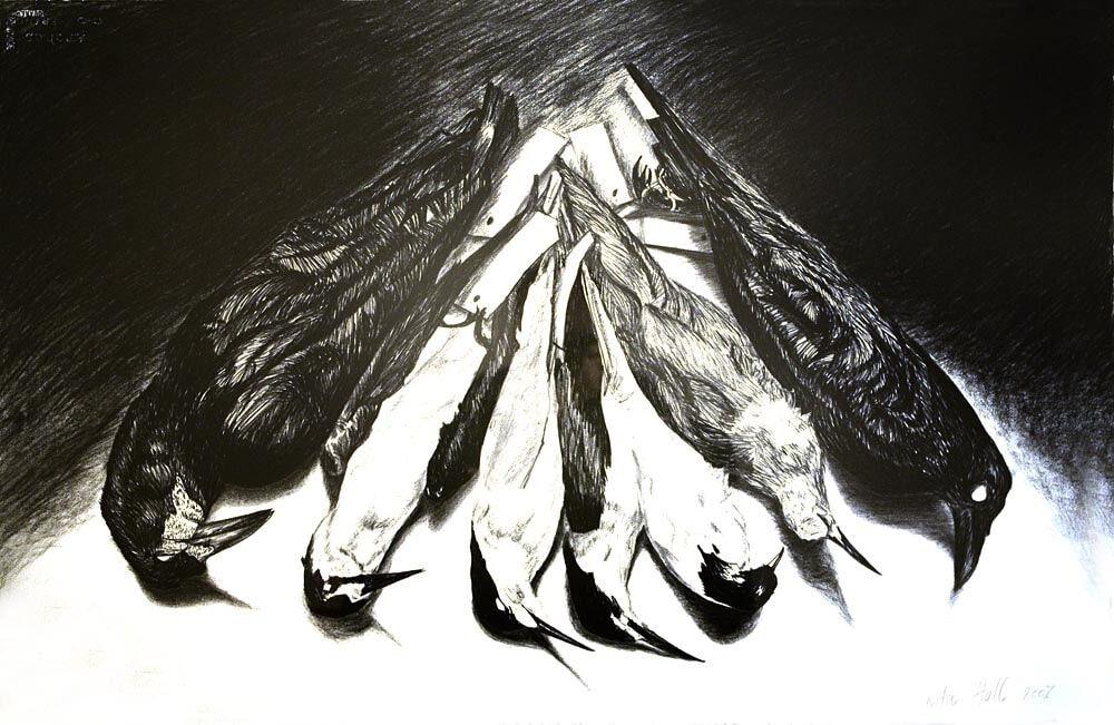 Terns 2007 charcoal 66 x 101cm