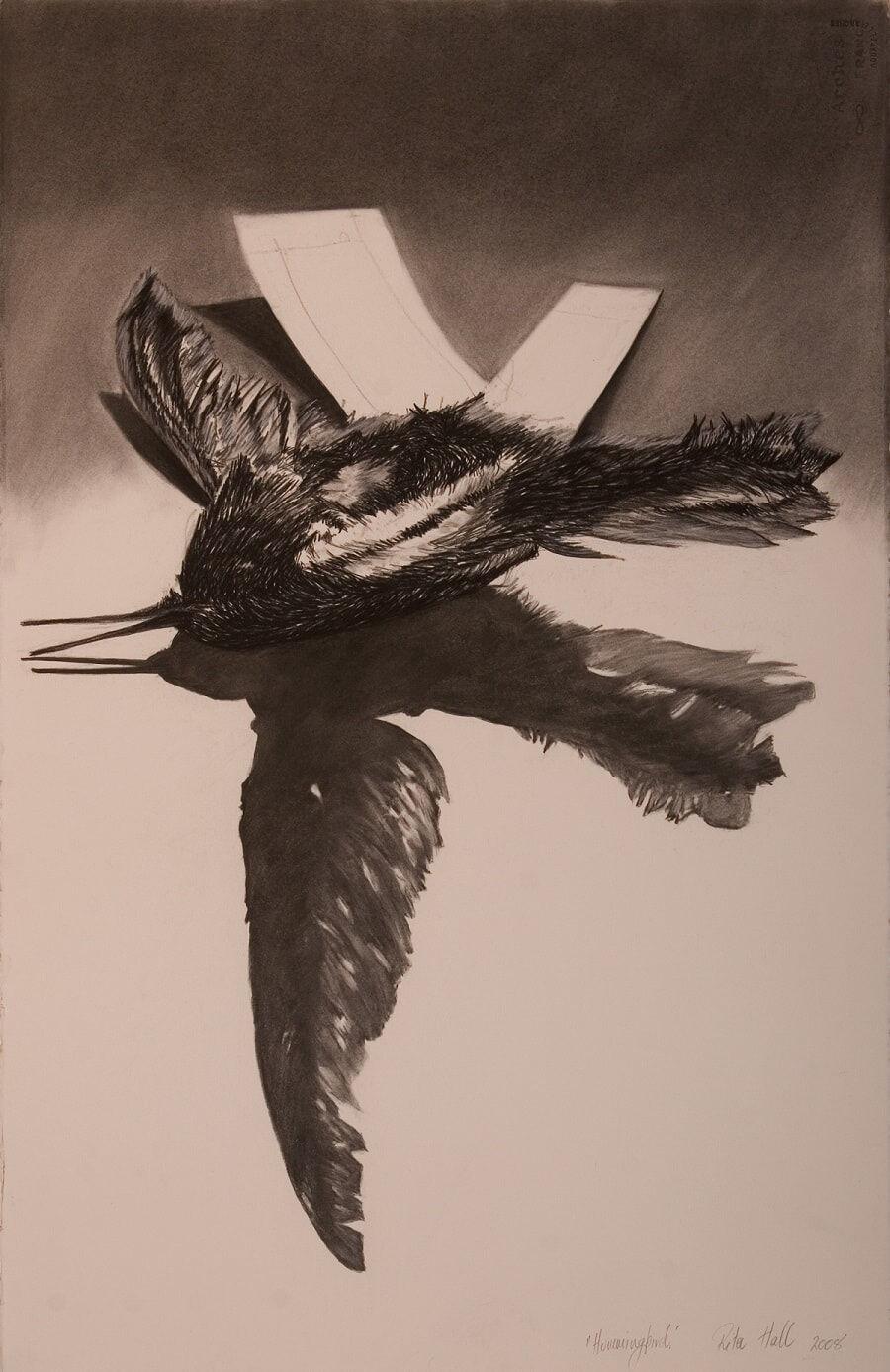Hummingbird 2008 charcoal, conte, white chalk 102.5 x 66.5 cm- AGSA Collection 2019