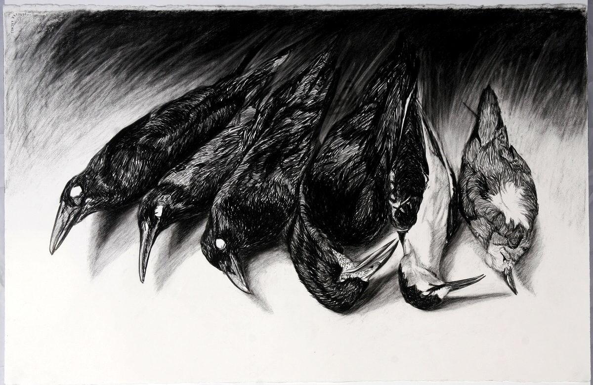 'Ornithology Collection' 2007 Waterhouse  2nd prize charcoal 66 x 101cm