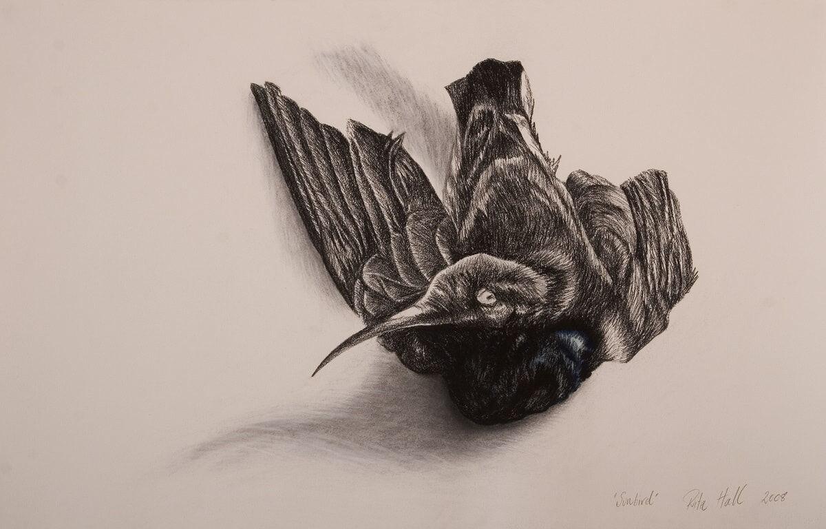 Sunbird I 2008 charcoal watercolour & pastel 66x101cm