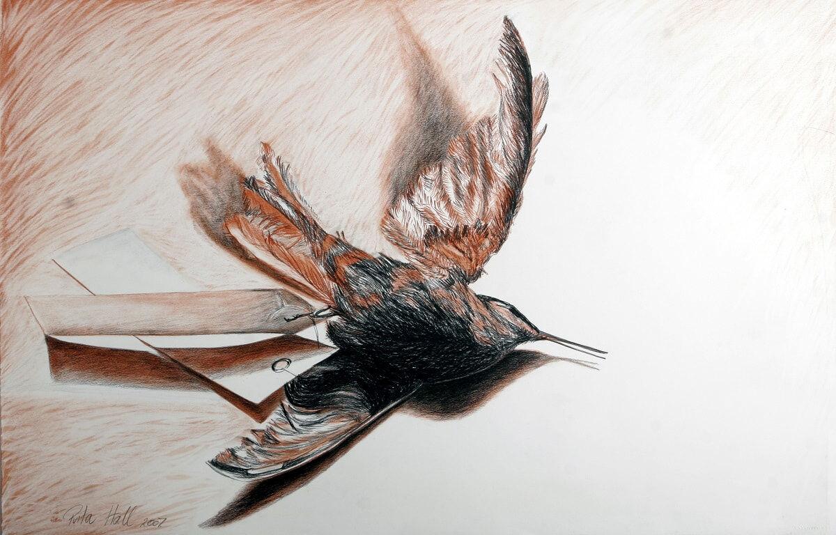 Hummingbird V 2007 conté & charcoal 66x101cm