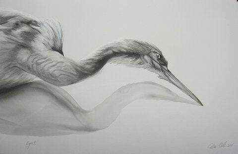 Egret 2008 Watercolour and charcoal 66x102