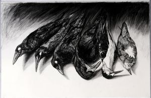 'Ornithology Collection' 2007 Waterhouse  2nd prize charcoal 66 x 101cm