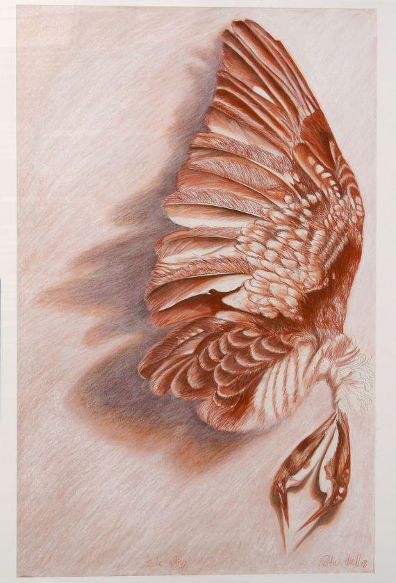 Blue Wing 2008 conté & charcoal on paper 125x85cm FRAMED