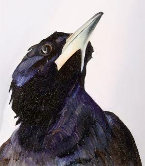 2. Australian Magpie - SOLD