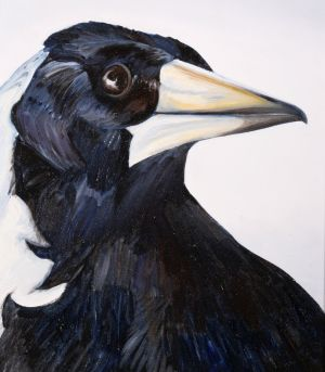 3. Australian Magpie - SOLD