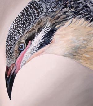 7. Spiny Cheeked Honeyeater - SOLD