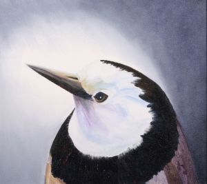 20. White Faced (Throat) Chat - SOLD