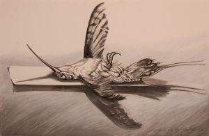 Hummingbird _ Tag 2008 Charcoal 66x101cm