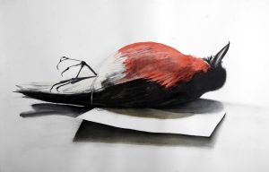 Red Bird and Tag 2007 charcoal and watercolour 88 x 115cm