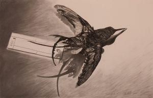 Hummingbird III 2008 Charcoal 66x101cm
