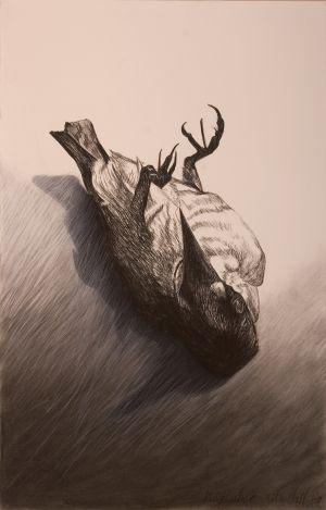 Kingfisher 2008 conté & charcoal 101x66cm