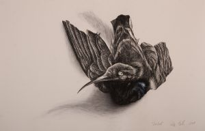 Sunbird I 2008 charcoal watercolour & pastel 66x101cm