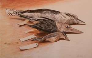 Three Kingfishers 2007 charcoal pastle and conté 66x101cm