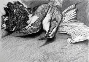 Babblers And Wings (specimens) 2007 conté & charcoal 60x85cm