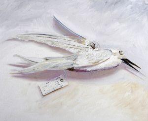 White Tern 2006 Oil on canvas 45x55cm