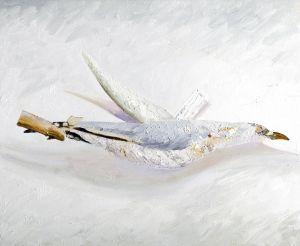 Silver Gull 2006 Oil on canvas 45x55cm