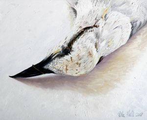 Gull Billed Tern 2007 Oil on canvas 46x56cm