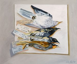 Four Small Honeyeaters 2007 Oil on canvas 51x61cm